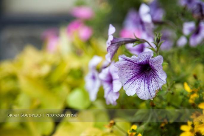 Flowers-IMG_5201-edit