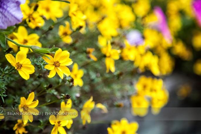 Flowers-IMG_5203-edit