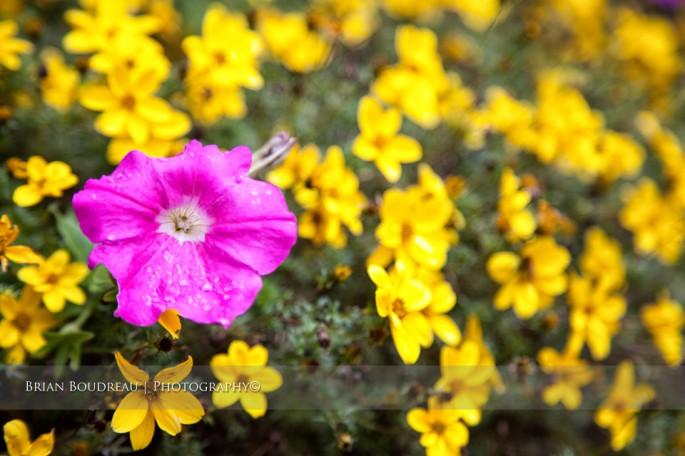 Flowers-IMG_5204-edit