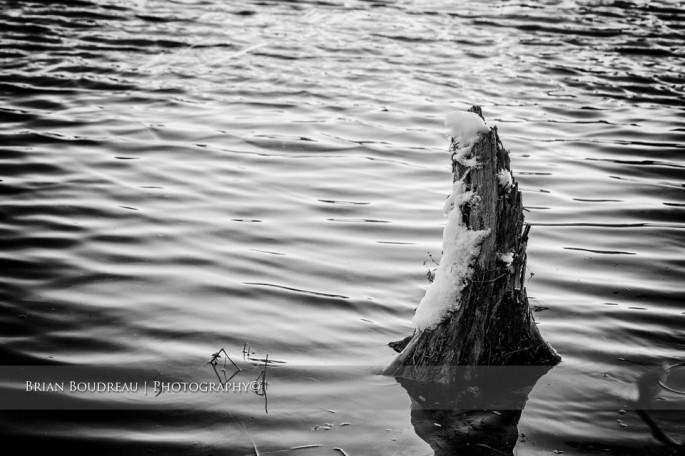 Old-Stump-